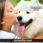 beneficios-de-una-mascota-para-la-salud-niños